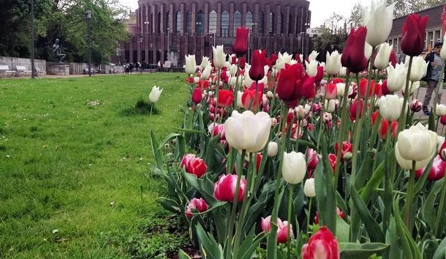 #Tulpen & #Tonhalle #Düsseldorf