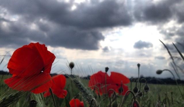 #Mohn und #Wolken in der #Jücht #düsseldorf #itter