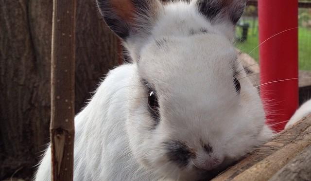 #Kaninchen